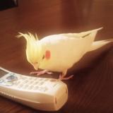 電話子機に話しかけるメカオ君