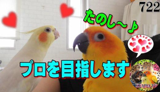 オカメインコ「僕、歌手になります」|面白い可愛い動物癒し動画722 Singing Cockatiel
