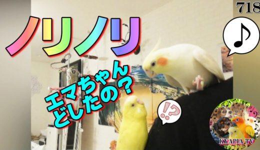 オカメインコ 納豆を混ぜる音でヘドバンに不思議がるセキセイインコ|おもしろいかわいい動物動画718 Cute budgie Cockatiel