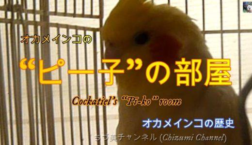 """オカメインコの""""ピー子""""の部屋 オカメインコの歴史 (History of cockatiel)"""