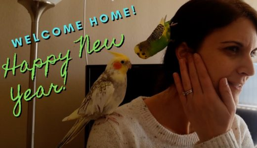 Happy New Year's Reunion with Pillow and Pearl | Budgie and Cockatiel Friends