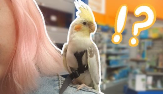 My Cockatiel Goes To a Pet Store For the First Time!