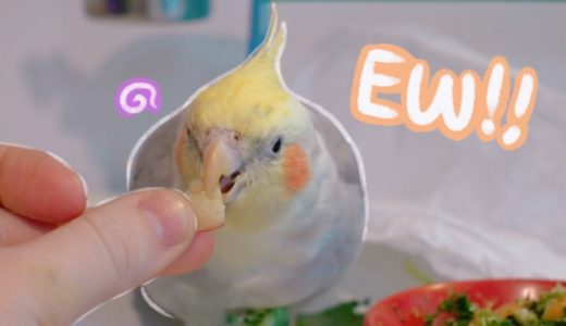 Cockatiel Tries Different Food!