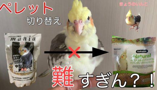 【苦戦】オカメインコってシード好きすぎん?! Cockatiel too likes seed
