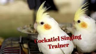 Teaching Cockatiel Happy birthday