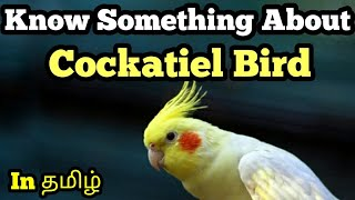 Know Something About COCKATIEL BIRD in தமிழ்