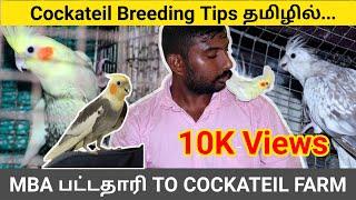 Cockatiel breeding tips in Tamil ( தமிழ் ) | Cockatiels Bird Sales | MBA TO COCKATIEL FARM