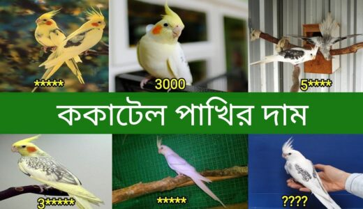 ককাটেল পাখির দাম | Cockatiel Bird Price In Bangladesh and India